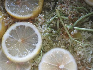 elderflowers mascerating in syrup