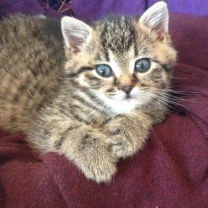 Kitten George